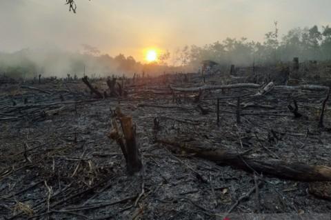 Juni-Juli, Karhutla di OKU Sumsel Capai 25,8 Hektare