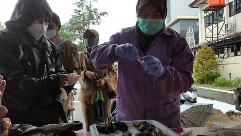 Sampel Kawanan Burung Mati di Cirebon Dilakukan Tes PCR