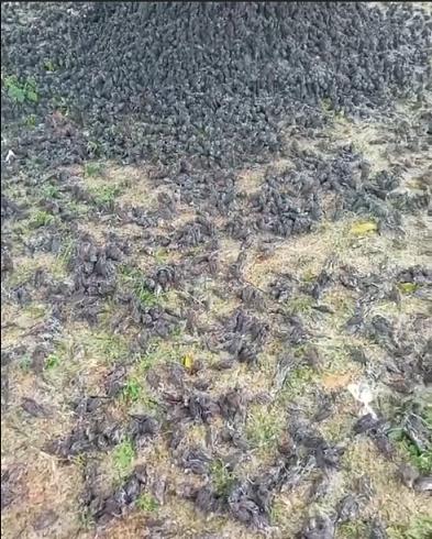 Pakar Ungkap Penyebab Ratusan Burung Pipit Mati Mendadak