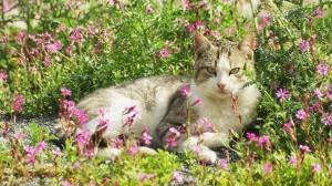 Hati-Hati, 6 Tanaman Ini Berbahaya bagi Kucing