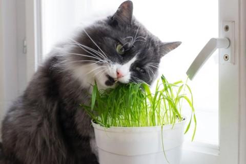 Populer Properti, Tanaman Hias Berbahaya untuk Kucing hingga Tips Memilih Keramik
