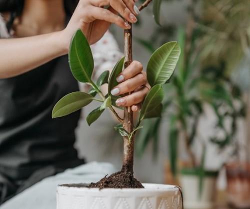 Ini tiga kesalahan saat merawat tanaman. (Foto: Ilustrasi/Pexels.com)