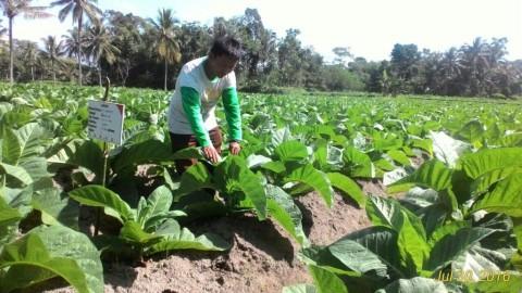 Kebijakan Cukai Tembakau Diminta Tak Mengabaikan Industri dan Petani