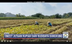 Wow! Omzet Budidaya Kangkung Capai Puluhan Juta Rupiah