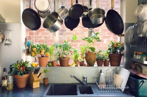 5 Tanaman Hias yang Cocok Diletakkan di Dapur