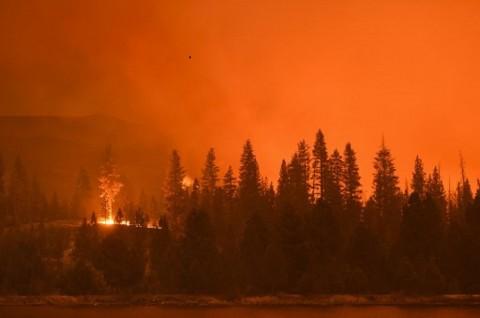 Kebakaran Windy Fire di California Ancam Hutan Nasional Sequoia