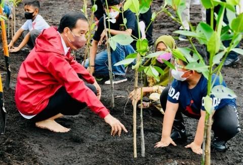 Jokowi: Rehabilitasi Mangrove Berkontribusi Besar Serap Emisi Karbon