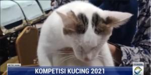 Sempat Vakum 2 Tahun, Kontes Kucing se-Indonesia Kembali Digelar di Semarang