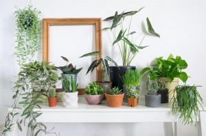 Bersihkan Udara, 5 Tanaman Hias Ini Wajib Ada di Rumah
