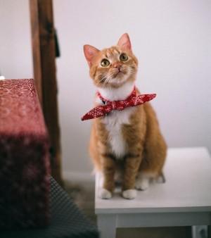 Kucing Menatap Dinding, Apakah Sedang Melihat Hantu?