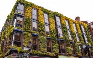 Vertical Garden: Permadani Hijau Penyamar Tampilan Ruangan