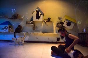 Menurut pemilik VR, Violetta Hasan Noor, VR bukan LSM, bukan komunitas, tapi lebih ke gerakan pribadi secara individu untuk menyelamatkan kucing-kucing yang terlantar, setidaknya kini ada 149 kucing yang berhasil diselamatkannya.