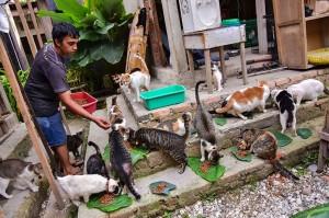 Awalnya sempat kewalahan untuk mengurusi puluhan kucing terlantar itu, namun dengan bantuan beberapa pihak akhirnya bisa menjadikan VR sebagai 'surga' bagi para kucing-kucing terlantar. Tindakan pertama adalah memastikan kucing-kucing itu tidak kelaparan, sehingga tempat itu selalu menyediakan makanan kering selama 24 jam dan makanan utama sebanyak dua kali sehari.