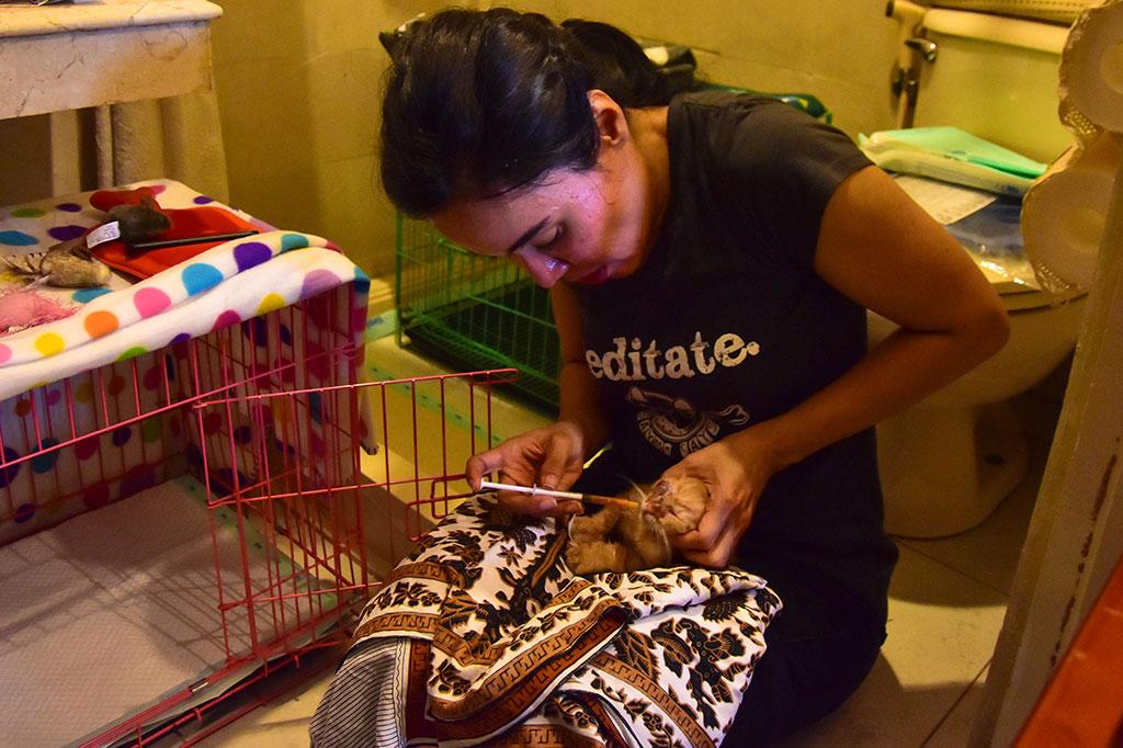 Dibutuhkan biaya sekitar Rp3,5 juta per pekan, atau Rp14 juta per bulan untuk makan kucing saja, dan itu di luar biaya klinik kesehatan hewan.