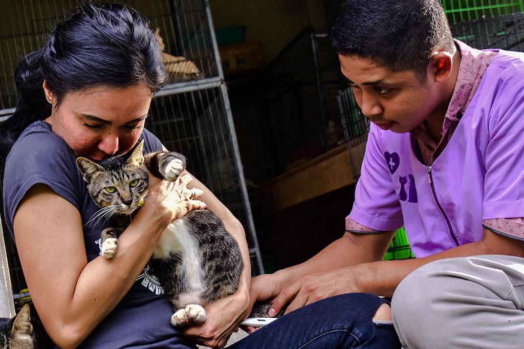 Sebelum ke penampungan, kucing yang diselamatkan dibawa ke klinik dokter hewan untuk divaksin, serta diberi obat cacing dan obat kutu. Dokter hewan setiap tiga bulan sekali rutin mengunjungi VR untuk memeriksa kesehatan kucing-kucing tersebut.