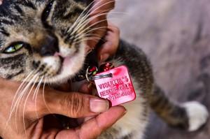 Setiap kucing VR yang dibiarkan berkeliaran memiliki tanda khusus berupa kalung dengan bandul lonceng dan plat warna merah. Di plat itu tertulis nama Violetta's Rescue dan nomor telepon.
