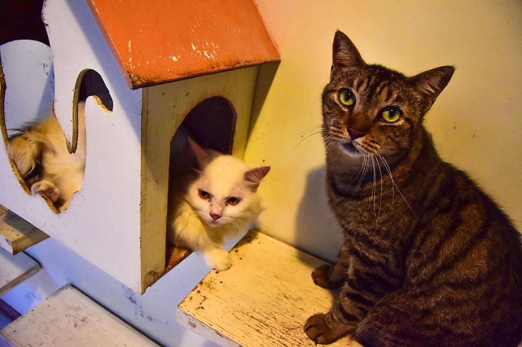 Tidak terasa sudah 13 tahun Violetta menjalani pilihan hidupnya sebagai ibu pelindung kucing terlantar di Kota Pekanbaru, Riau. Kebanyakan kucing yang diselamatkan adalah korban tabrak lari dan korban penganiayaan manusia.