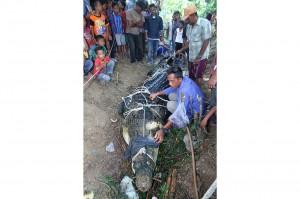 Menurut petugas BKSDA Aceh, buaya tersebut diperkirakan berusia 70 tahun dikarenakan giginya yang sudah rontok. Buaya betina tersebut memiliki bobot sekitar 600 Kilogram, dengan panjang 4,80 meter serta lebar 60 Centimeter.
