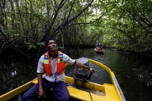 Pemandu mengantar wisatawan mengunjungi hutan bakau di anak aliran Sungai Sebong, Lagoi, Pulau Bintan, Kepulauan Riau.