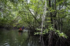 Hutan bakau di sepanjang 6,8 kilometer aliran Sungai Sebong itu merupakan kawasan ekowisata yang banyak dikunjungi wisatawan, terutama wisatawan mancanegara.