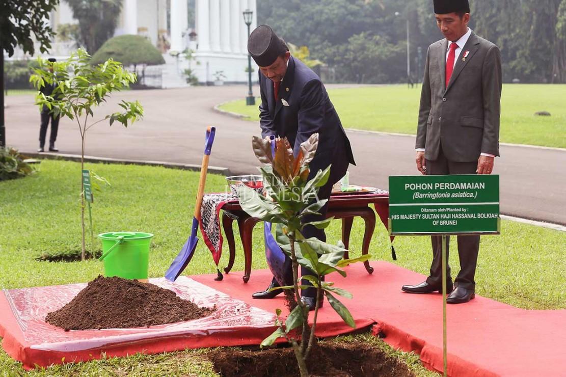 Jokowi Ajak Sultan Brunei Tanam Pohon Perdamaian