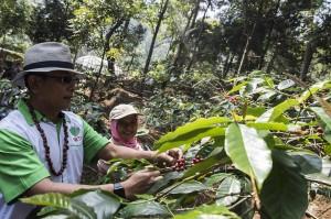 Ketua Himpunan Kerukunan Petani Indonesia (HKTI) yang juga sebagai Kepala Staf Kepresidenan Moeldoko (kiri) bersama petani memetik kopi Gunung Puntang di Desa Campaka Mulya, Kecamatan Cimaung, Kabupaten Bandung, Jawa Barat.