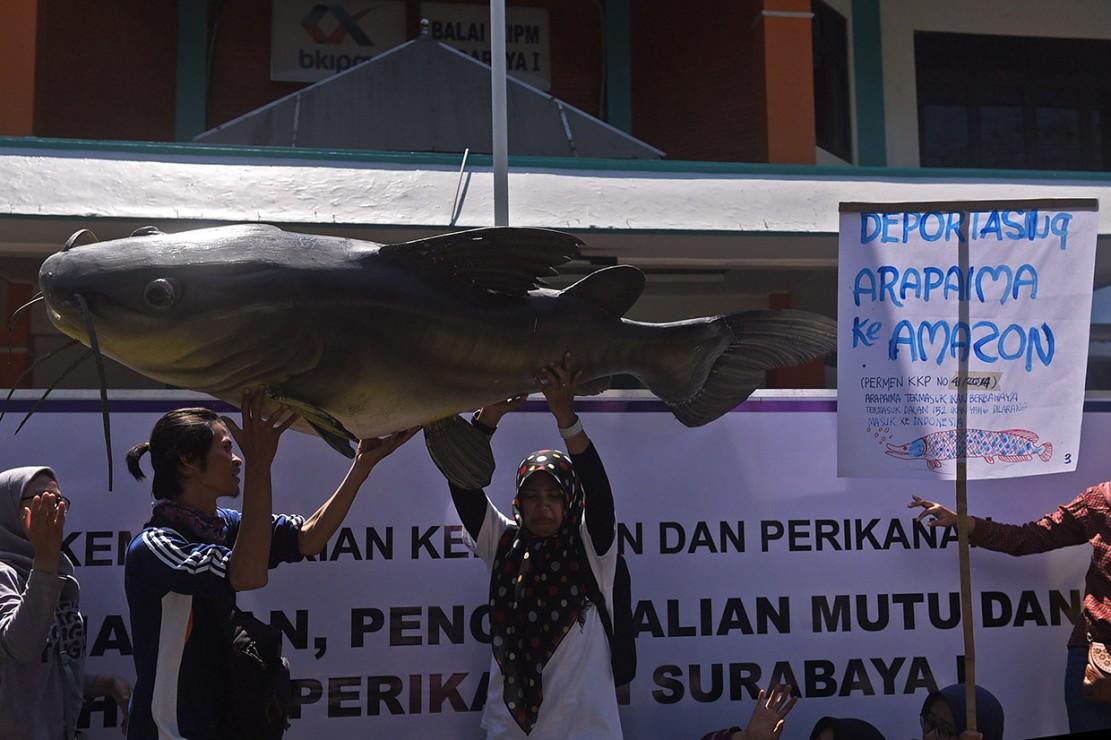 Aktivis Tuntut Pelepasan Liar Ikan Arapaima di Kali Brantas