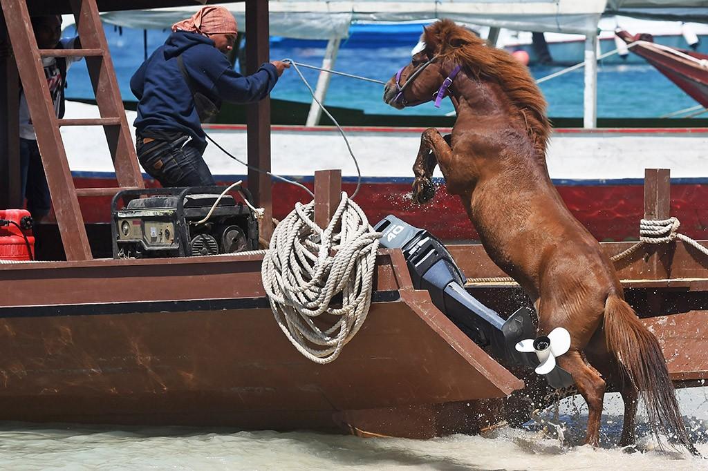 Pemilik kuda di pulau itu memilih mengevakuasi kudanya ke Pulau Lombok untuk menjaga keamanan kudanya.