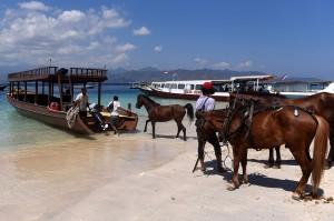 Warga mengevakuasi kuda peliharaannya ke perahu untuk diangkut ke Pulau Lombok di Gili Trawangan, Lombok Utara, NTB.
