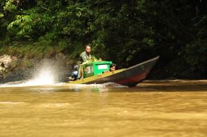 Sejumlah anggota tim Center for Orangutan Protection (COP) membawa kandang berisi Orangutan yang akan dilepasliarkan dengan menggunakan perahu cepat di Sungai Lejak, Kabupaten Berau, Kalimantan Timur.