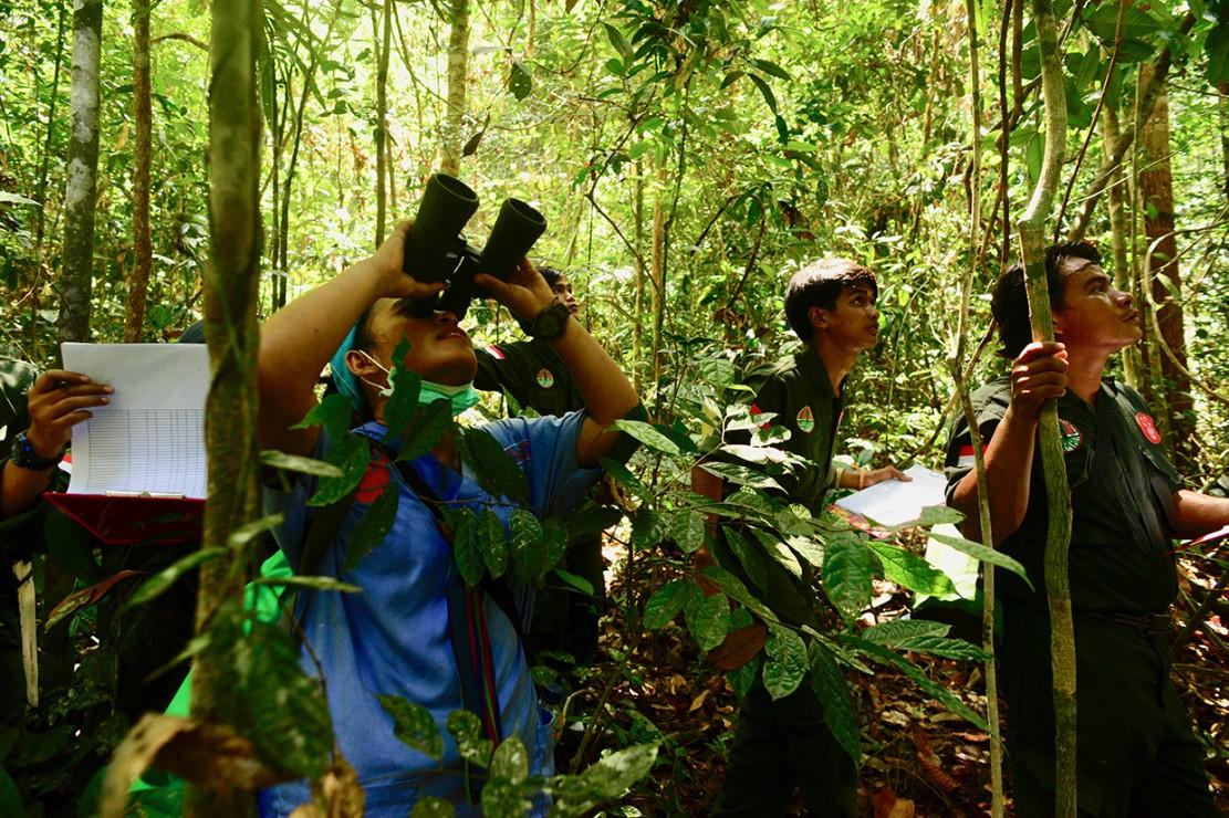 Sejumlah anggota tim Center for Orangutan Protection (COP) melakukan proses pemantauan terhadap dua individu Orangutan yang telah dilepasliarkan di di Hutan Lindung Sungai Lesan, di Kabupaten Berau, Kalimantan Timur.