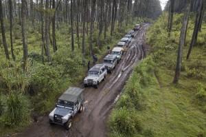 Sejumlah kendaraan 4x4 melewati hutan pinus saat membawa peserta untuk berwisata