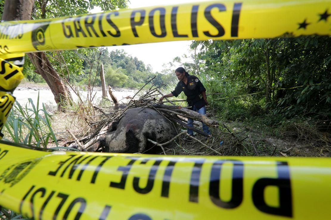 Gajah jantan yang diperkirakan berumur 40 tahun itu diduga mati sekira 15 hari lalu, karena tubuhnya yang terluka sudah membusuk saat ditemukan pada Kamis malam di area berjarak sekitar tiga kilometer dari pemukiman penduduk.
