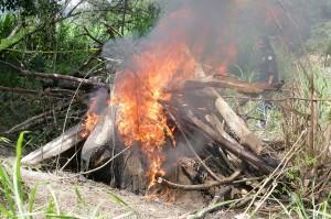 Petugas Conservation Response Unit (CRU) Peusangan, Bener Meriah membakar bangkai gajah sumatra (Elephas maximus sumatranus) yang ditemukan mati di pinggiran Sungai Peusangan antara perbatasan Kabupaten Bener Meriah dan Kabupaten Bireuen.