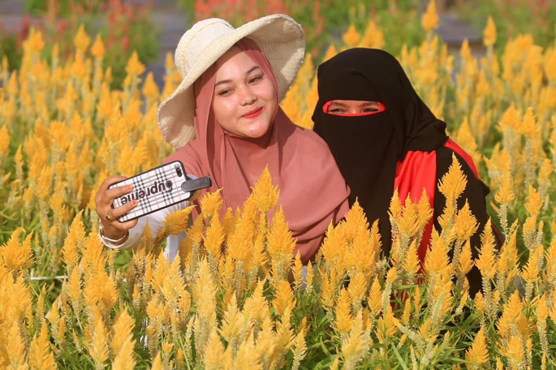 Pemilik taman bunga mengaku, taman bunga celocia seluas satu hektar yang baru dikelola sekitar empat bulan tersebut banyak dikunjungi wisatawan dari berbagai daerah setelah sempat viral di media sosial.
