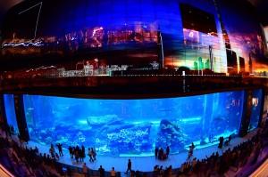 Dubai Mall akuarium merupakan akuarium di dalam mall yang terbesar di dunia.