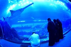 Pengunjung dapat melihat 33.000 biota laut dengan 85 spesies berbeda termasuk 400 kombinasi dari hiu dan ikan pari.
