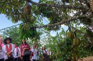 Ny Iriana kemudian melanjutkan kunjungan kerja ke Kebun Buah Purwosari, Mijen.