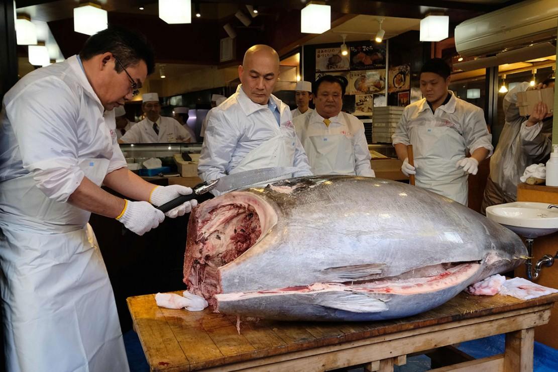Ikan tuna sirip biru spesies yang terancam punah seberat 278 kg dan ditangkap di lepas pantai utara Jepang tersebut dibeli oleh Kimura dengan harga 333,6 juta yen atau sekitar Rp 44 miliar.