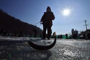 Pada sungai beku di Hwacheon tersebut, panitia telah menyiapkan sekitar 20 ribu lubang dengan cara dibor, dan melepaskan 180 ton ikan trout selama festival berlangsung.