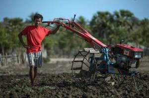 Octavianus Alexander Rajariwu tetap mengendalikan mesin traktor capung berwarna merah di atas lahannya di Desa Raekore. Teriknya sinar matahari yang menyengat dan keringat yang bercucuran tidak menghentikan pria yang akrab disapa Alex itu.