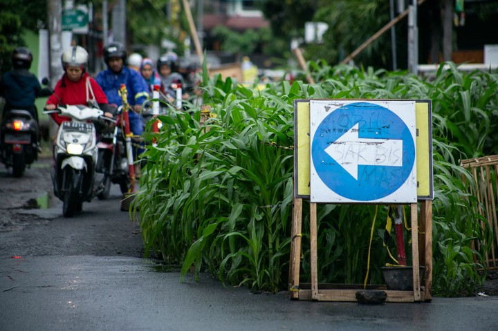 Protes Proyek Mangkrak, Warga Tanam Jagung di Tengah Jalan