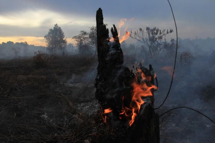 Kebakaran Lahan Gambut di Aceh Barat Meluas