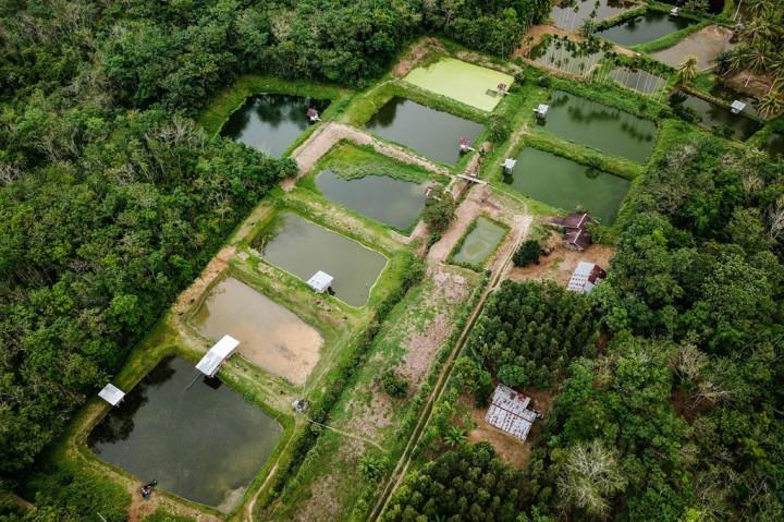 Kampung Patin yang Produktif dan Inovatif