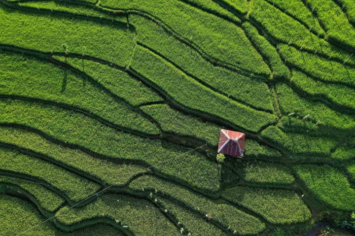 Cantiknya Areal Persawahan di Desa Sapit