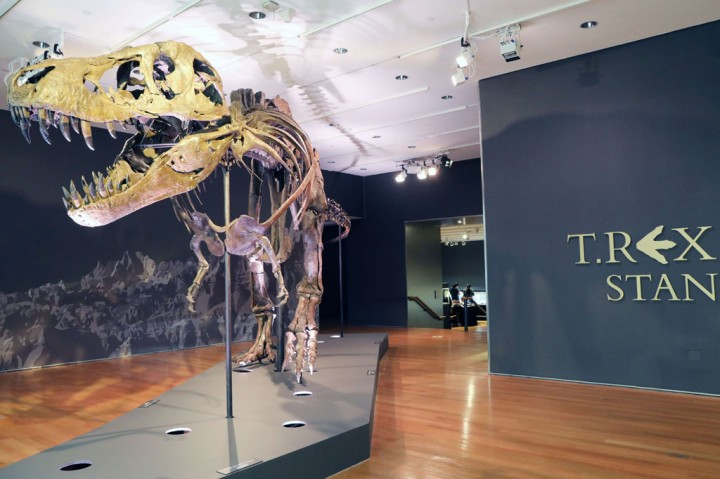 Fosil T-Rex Pecahkan Rekor Penjualan Dinosaurus