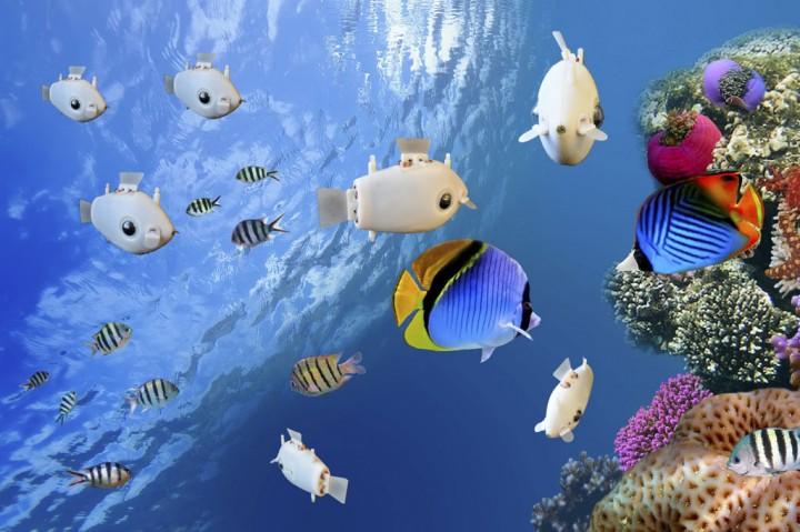 Melihat Robot Ikan Mini Berenang, Persis Seperti Aslinya