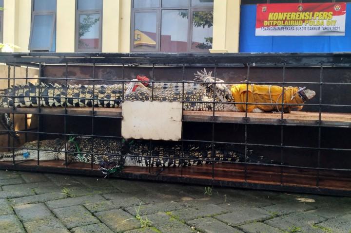 Mantab! Polda DIY Ungkap 6 Kasus Perniagaan Kepemilikan Satwa