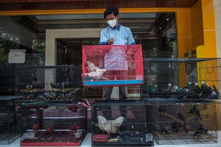 3 Berita Foto Terpopuler: Penyelundupan Ratusan Satwa Dilindungi
