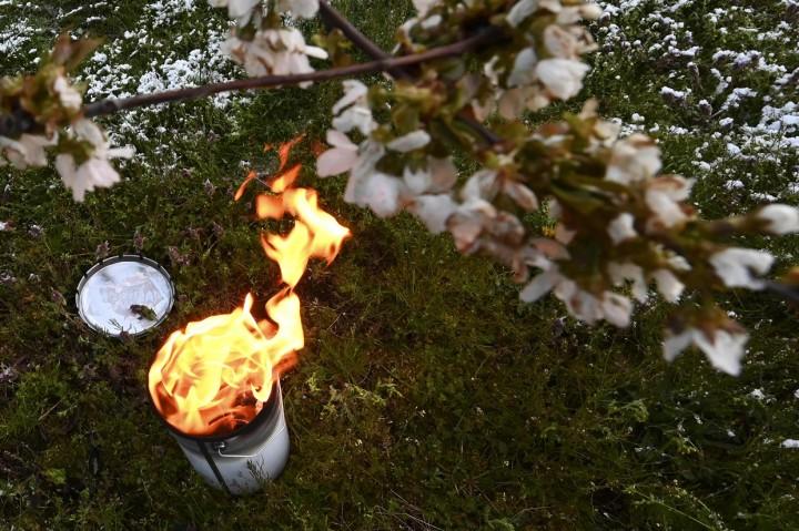 Potret Nyala Lilin Lindungi Kebun dari Embun Beku di Prancis